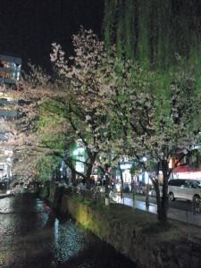 高瀬川沿いの夜桜と柳
